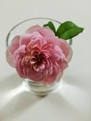 切り花1.jpg